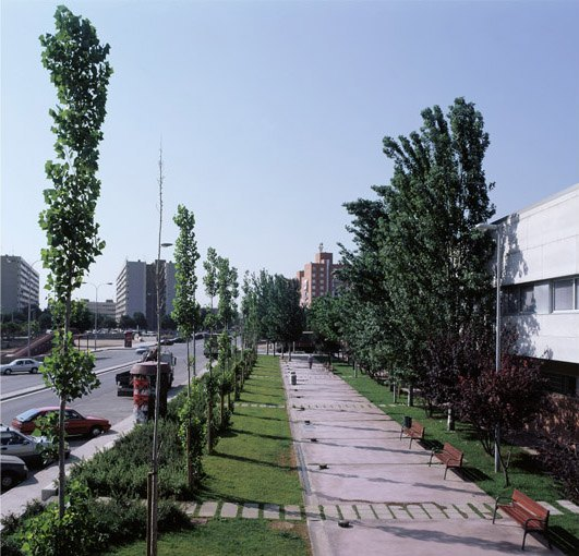 Plaça palmera Bennasar
